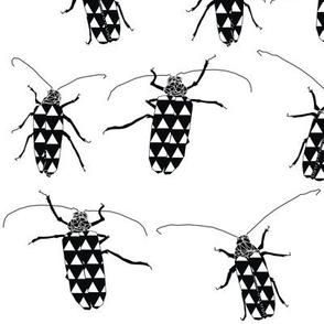 Huhu Black n White Beetles
