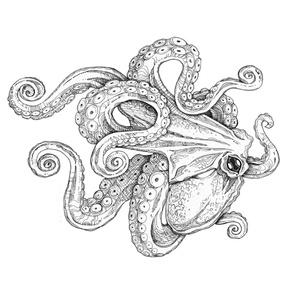 White Octopus, extra large