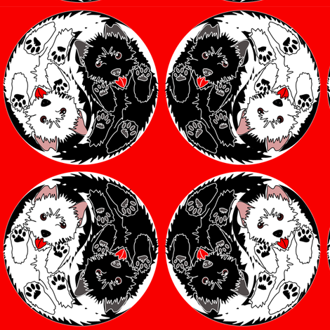Yin Yang Terrier pups on red