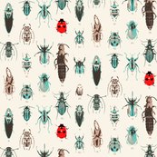 Rrrladybird_and_beetles_shop_thumb