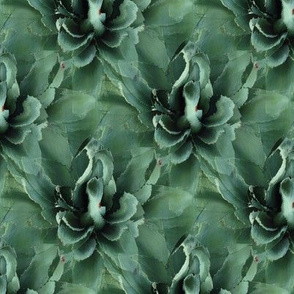 Agave Repeat Play