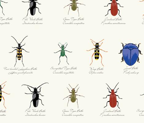 Beetle Specimen Collection