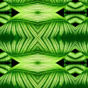 Linear Leaf