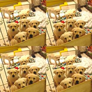 Gayle's puppy paper