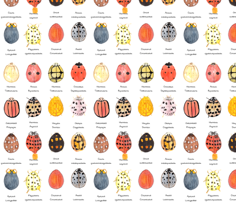 Ladybird, Ladybird. fabric by wiccked on Spoonflower - custom fabric