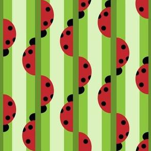 Ladybug Stripes