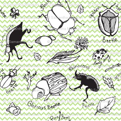 Beetle Bugs