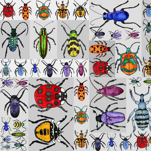 Rrrainbow_beetle_fun_shop_thumb