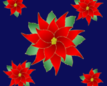 Rrpointsettias_square_thumb