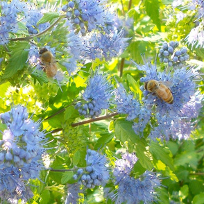 Bees and blue flowers