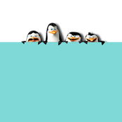 Pocket of penguins
