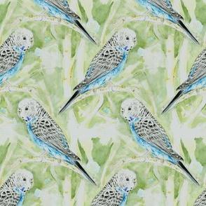 Blue Parakeet