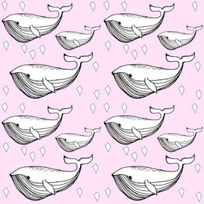 pink whale - elvelyckan