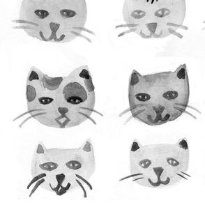 Gatti - Cats - B&W