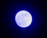 Rvernal_moon_-_bella_luna_2__sq_d__thumb