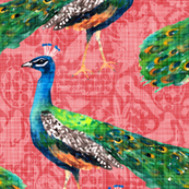 Rajah's Peacocks (in Coral)