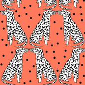Dalmatian - Carrot Orange by Andrea Lauren