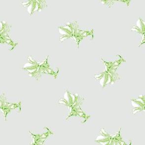 Green Lillies