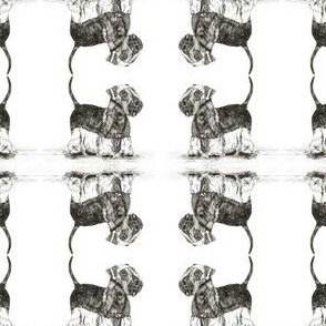 Cesky Terrier White Background Small repeat