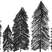 Line of Evergreens