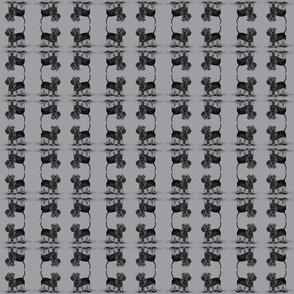 Cesky Terrier Dark Background