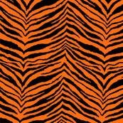 Bad Kimber's tiger stripes