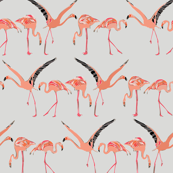 winter flamingos