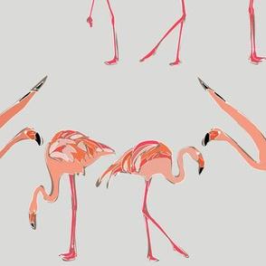 winter flamingos