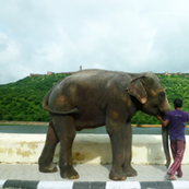 Elephant going to Amber Fort, Jaipur