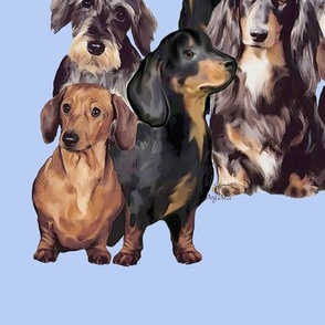 dachshunds_in_blue