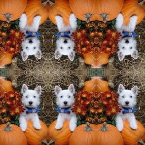 Westie n pumpkin