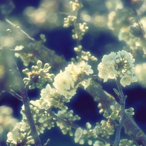 Blossom_sublime