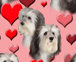 Rseamless_havanese_and_hearts_thumb