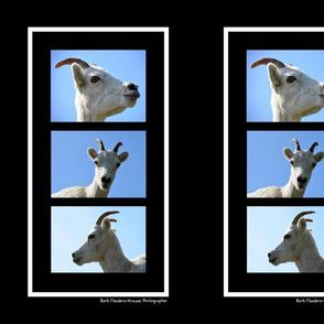 Three Ewe Sheep Panel