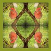 Finch1____