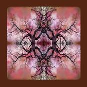 Garry_Oak_branching_out-5___