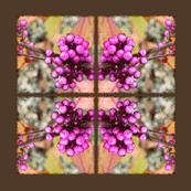 Pink_Berries___