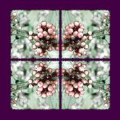 Pink_Berries_-2