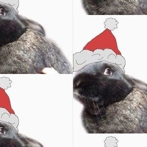 Santa Bunny!