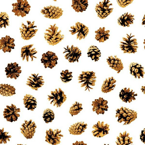 pine cones on white