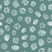 pine cones on frosty green