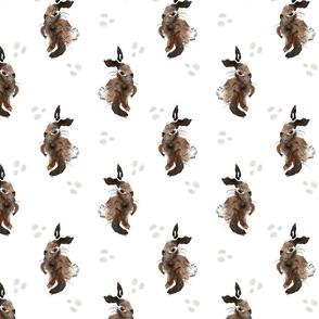 Brown_Bunny_2