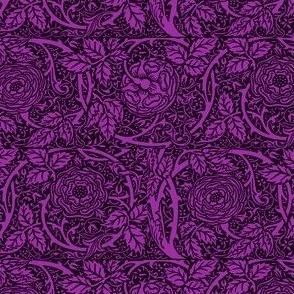 Royal Purple Roses Darkest