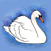 The Ugly Duckling Swan
