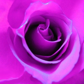 Purple Neon Rose