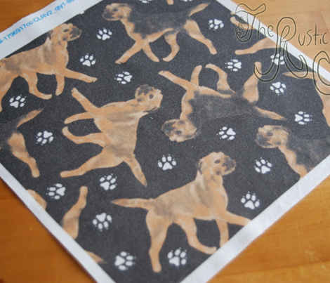 Trotting Border Terriers and paw prints - black