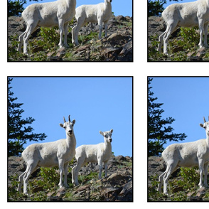 Ewe and Lamb Panel