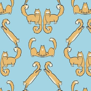 Fluffy cat damask - blue