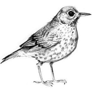 Bird!