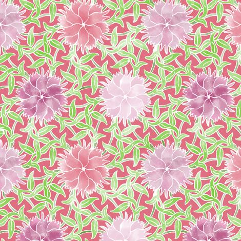 Dianthus flower